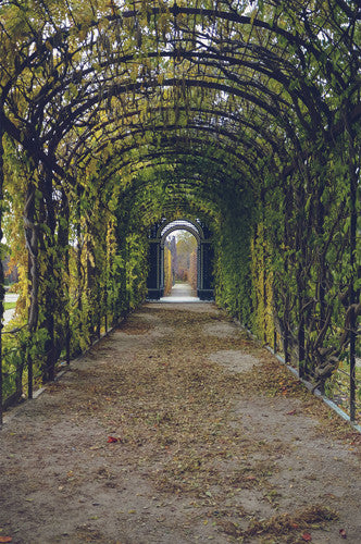 6795 Vine Garden Door Walkway Printed Backdrop - Backdrop Outlet