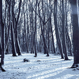 6797 Creepy Snow Forest Printed Backdrop - Backdrop Outlet