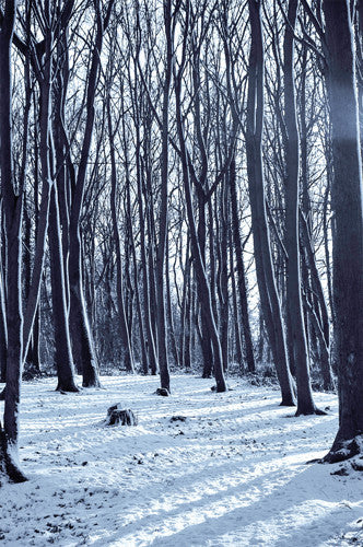 Creepy Snow Forest Printed Backdrop 6797 Backdrop Outlet