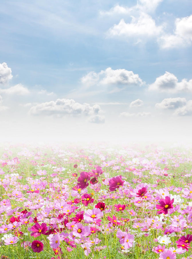 Printed Pink And Hot Pink Daisy Flower Field Backdrop Blue Sky With