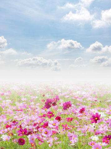 Printed Pink and Hot Pink Daisy Flower Field Backdrop Blue Sky with Clouds Background - 6840 - Backdrop Outlet
