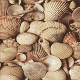 Beach Shells Backdrop - 7163 - Backdrop Outlet