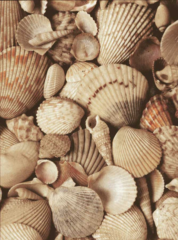 7163 Beach Shells Backdrop - Backdrop Outlet