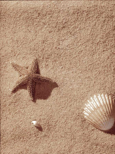 7164 Beach Sand with Starfish Backdrop - Backdrop Outlet