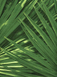Printed Palms Backdrop - 7313 - Backdrop Outlet