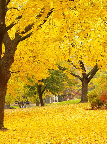 Autumn Yellow Park photo Backdrop - 7747 - Backdrop Outlet