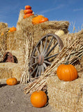 Autumn Pumpkin Patch - 7815 - Backdrop Outlet