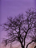 Purple Sky Tree Backdrop - 8034 - Backdrop Outlet