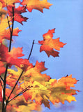 8035 Autumn Sky Backdrop - Backdrop Outlet