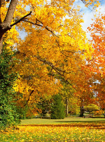 Golden Leaves Park Trees Autumn Fall Photography Backdrop - 9210 - Backdrop Outlet