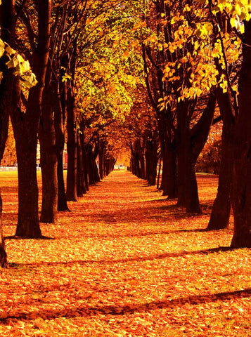 Autumn Path Backdrop - 9211 - Backdrop Outlet