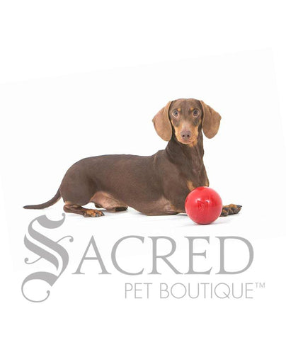 products/Aussie-Dog-Enduro-tough-small-dog-ball-toy-dachshund-SY.jpg