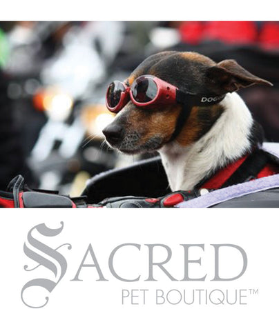 products/Doggles-lifestyle2-SY.jpeg