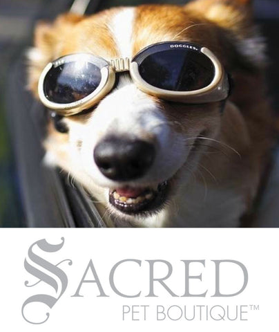 products/Doggles-lifestyle3-SY.jpeg