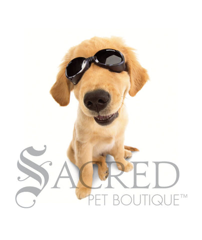 products/Doggles-lifestyle4-SY.jpeg