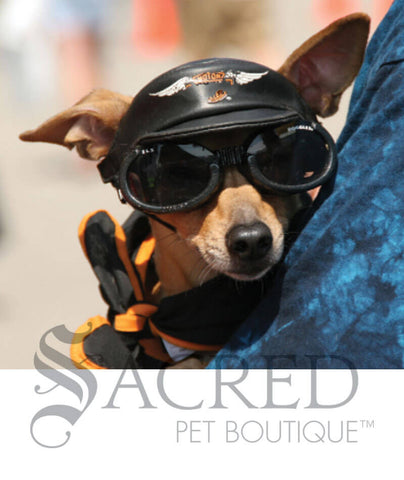 products/Doggles-lifestyle6-SY.jpeg