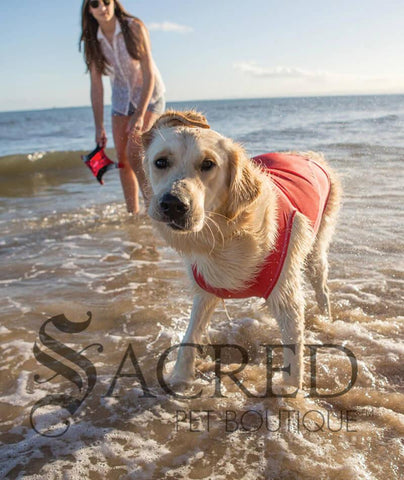 products/Ezydog-Rashie-UV-sun-protection-dog-shirt.jpg