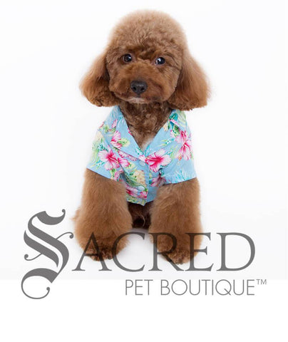 products/Hawaiian-blue-hibiscus-shirt-for-dogs-3-SY.jpg