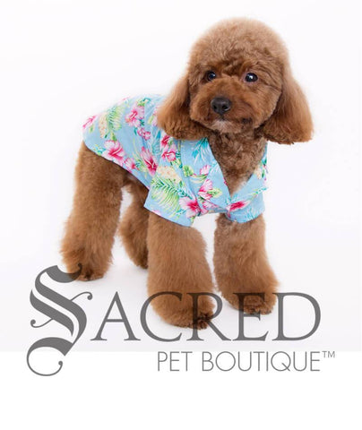 products/Hawaiian-blue-hibiscus-shirt-for-dogs-6-SY.jpg