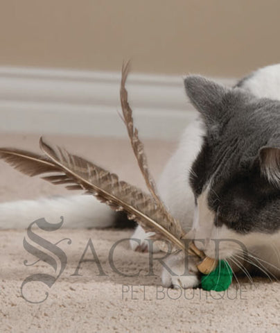 products/Kitty_Kopter_cat_toy.jpg