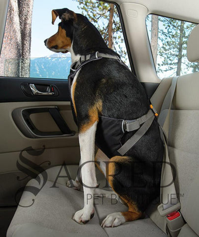 products/Ruffwear-Load-up-car-harness-lifestyle-SY.jpg