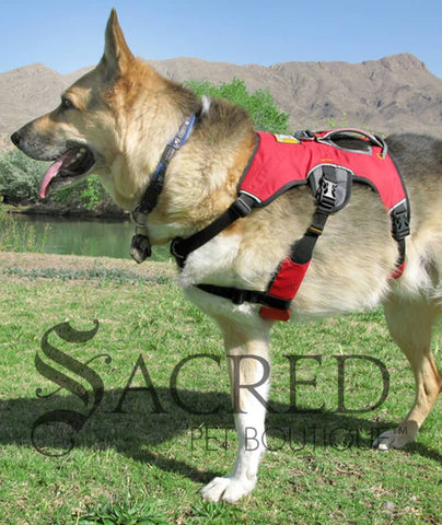 products/Ruffwear-Web-Master-Red-2-SY.jpg