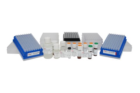 GlykoPrep®-plus Rapid N-Glycan Sample Preparation with InstantPC (96-ct) [GPPNG-PC]