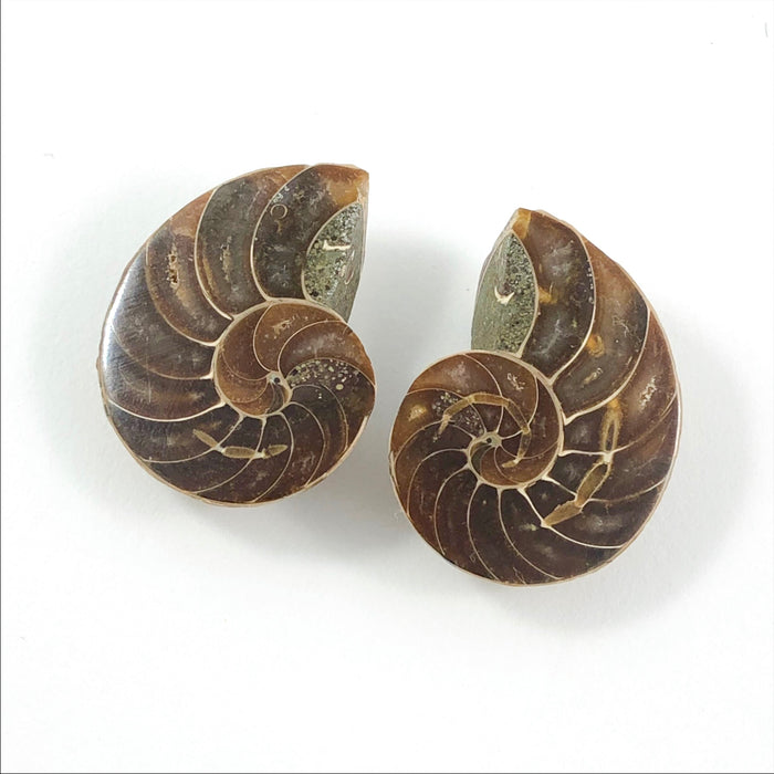 Fossil Ammonite Cretaceous 90 million year old - Buy only with custom jewelry order
