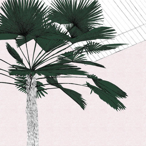 Clare Halifax: A Green Palms Blush