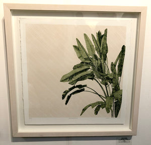 Clare Halifax: A Big Fan of Palms