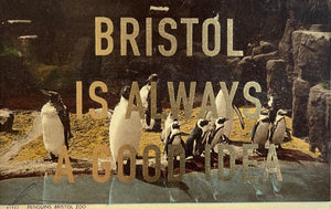 Dave Buonaguidi: Bristol Postcard - Penguins at Bristol Zoo