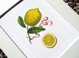 Limon Illustration