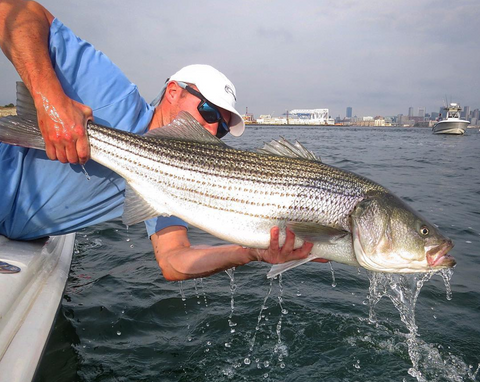Pro Tips: Top 5 Striped Bass Flies