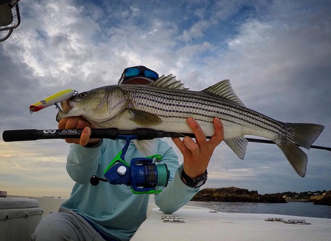 The Best Striped Bass Reels for Every Angler