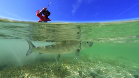 VIDEO: Fly Fishing the Cuban Flats
