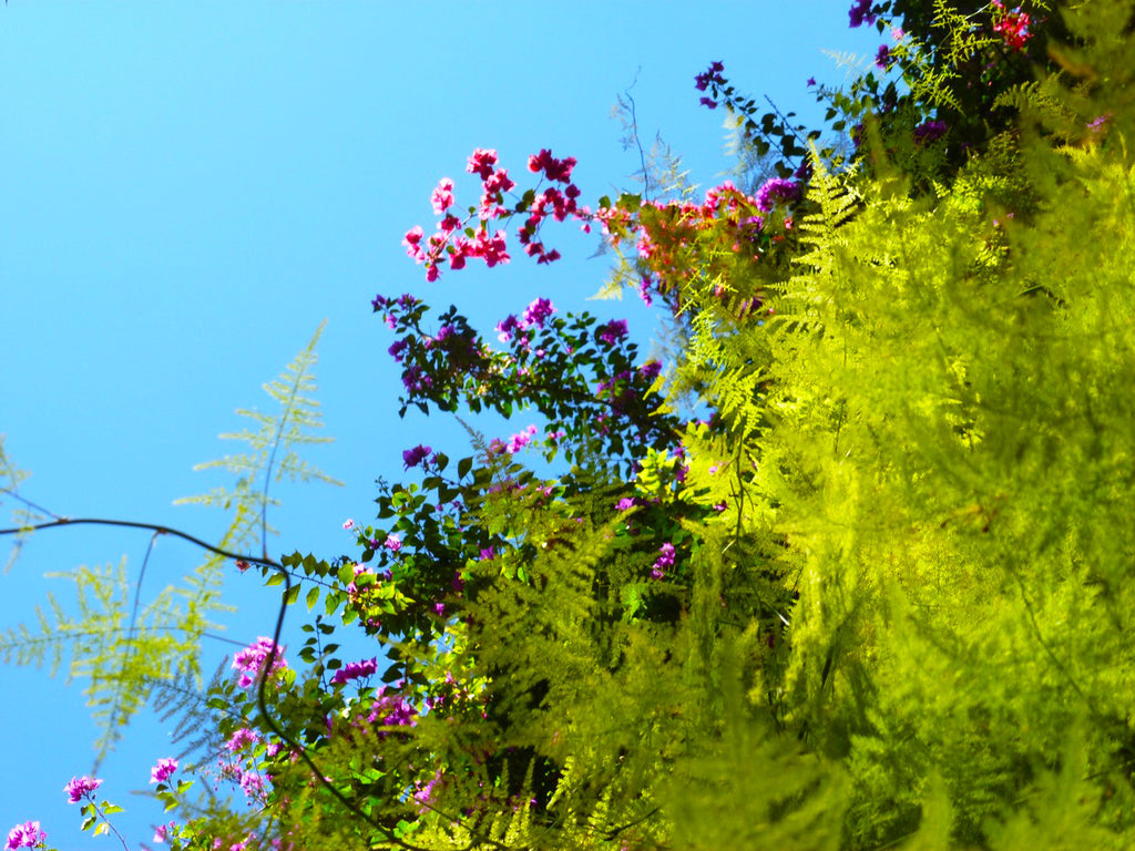 Armelle Aulestia, Maroc, Morocco, Marrakesh, Marrakech, bougainvilliers, blue sky, up side down landscape