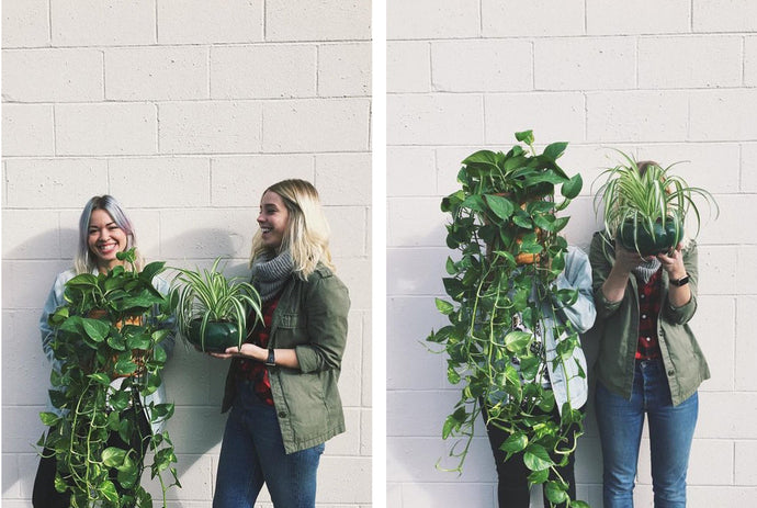 Meet Becky & Rachel, Founders of Plantuary