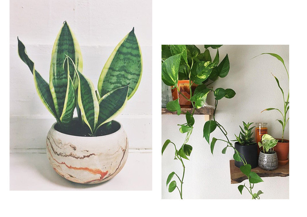 Plantuary, Seattle Plant shop, Standard Goods, The Standard Goods,PNW, Shop indoor plants seattle, capitol hill
