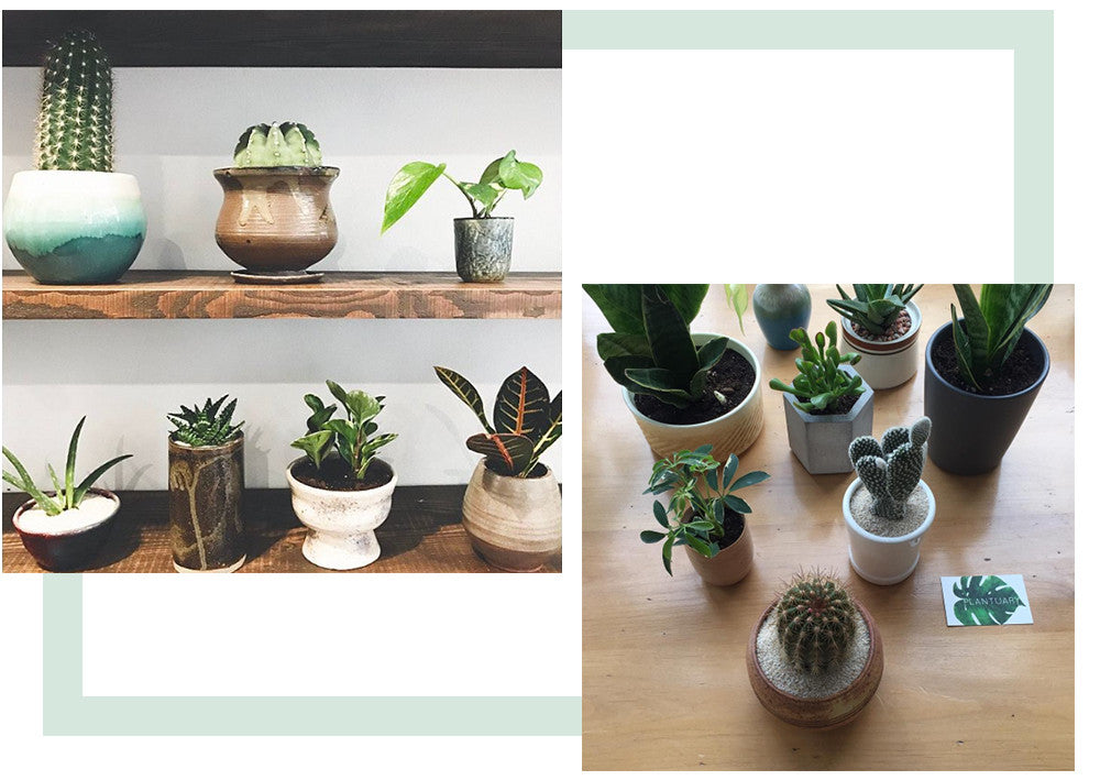 Plantuary, Seattle Plant shop, Standard Goods, The Standard Goods,PNW, Shop indoor plants