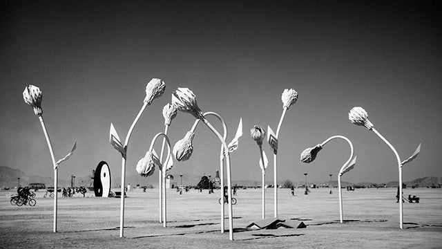 Burning Man 2014 - 5563 - Desktop Image