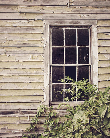 Rural Decay / Photography Print