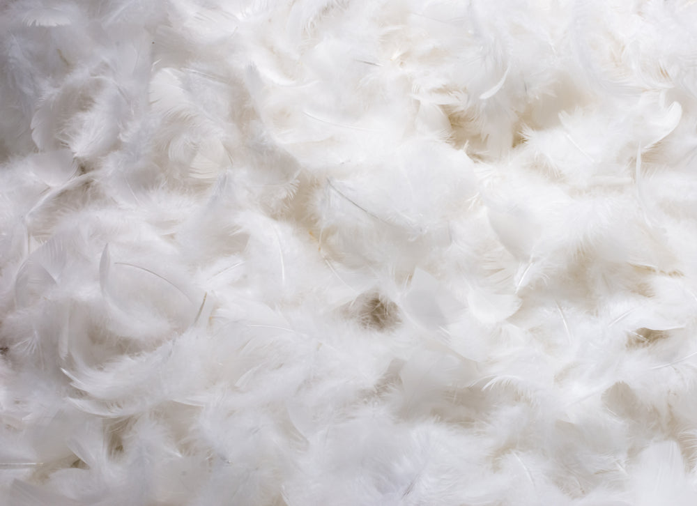 duck down feathers for pillow