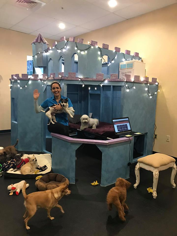 A blue, doggy castle playhouse, built for a dog daycare