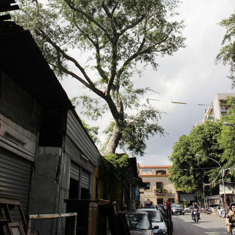 Trees grow through stalls in Palermo's Flea Market