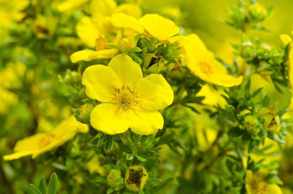 INGREDIENT SPOTLIGHT: EVENING PRIMROSE OIL BENEFITS FOR EVERY SKIN TYPE