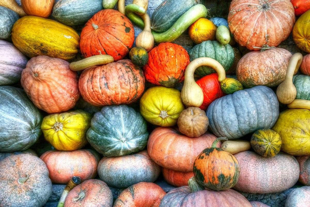 INGREDIENT HIGHLIGHT: PUMPKIN BENEFITS FOR THE SKIN