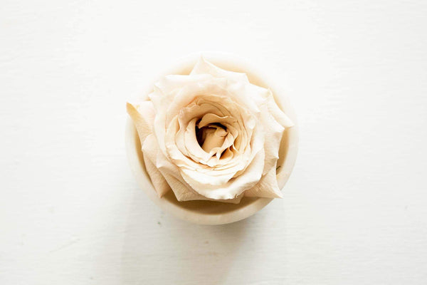Ingredient Spotlight: Rose and Rose Water Skin Benefits