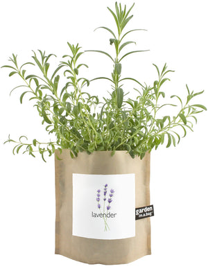 Grow Lavender in a Bag
