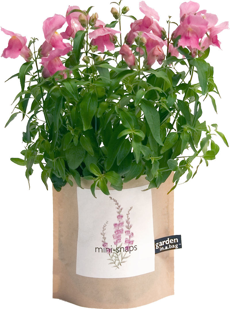 Grow Snapdragons in a bag