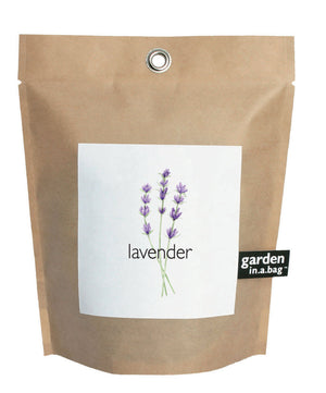 Small Lavender Garden-in-a-Bag